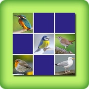 Memory game for adults - common birds - online and free