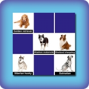 Dog breeds memory game - online and free