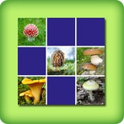 Memory game for adults - mushrooms - online and free