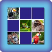 Memory game for kids - Tropical animals - online and free