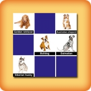 Memory game for seniors - Dog breeds - online and free