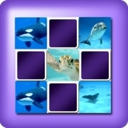 Memory game 2 player - marine animals