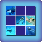 Marine animals memory game