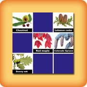Memory game for seniors - leaves of trees - online and free
