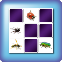 memory game insects