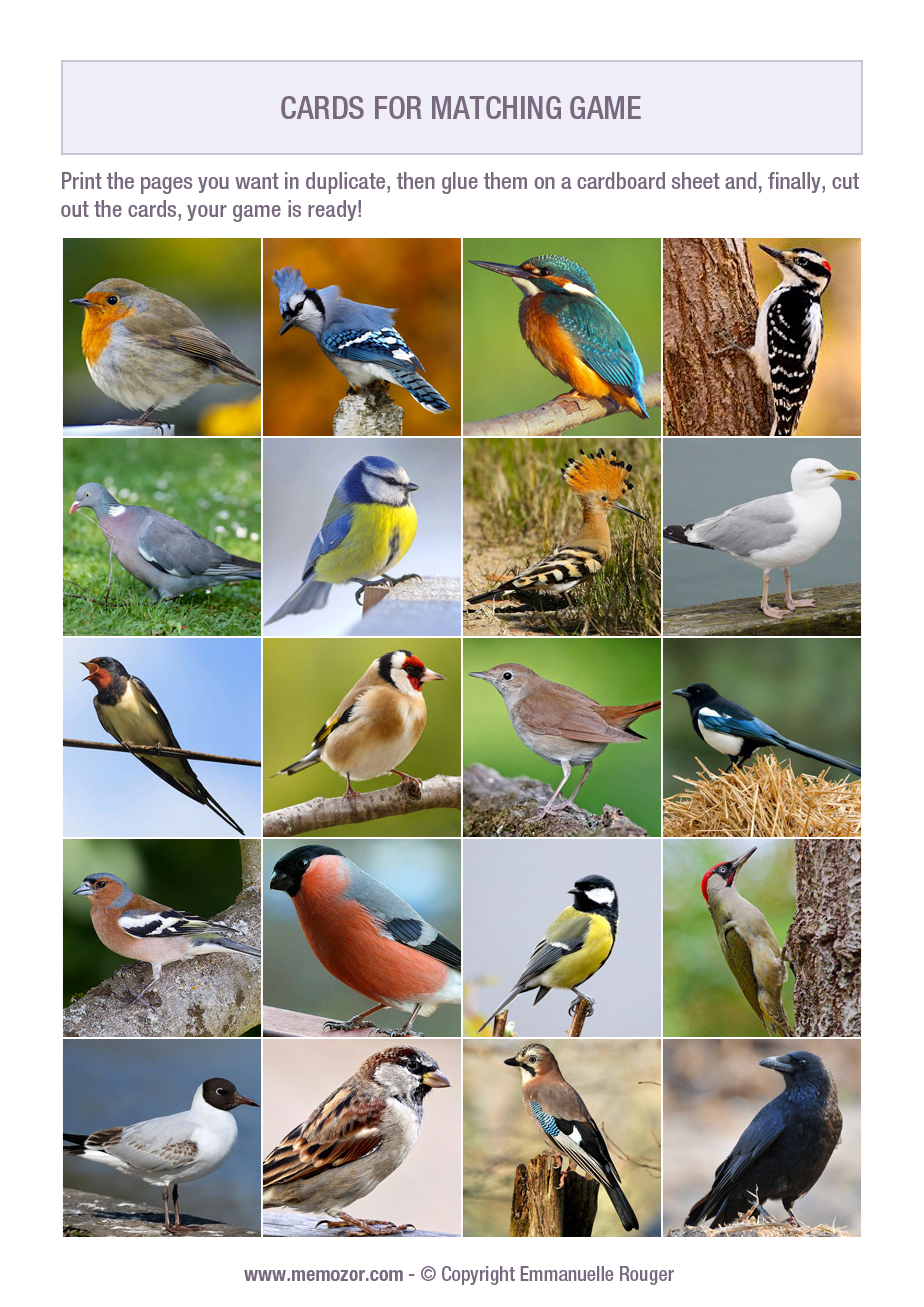 graphic regarding Printable Birds identify Free of charge printable memory match for grownups - birds - Print and