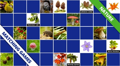 Free online memory games Nature
