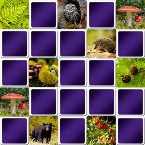 Big memory game forest