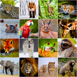 Grid of pictures to memorize - animals
