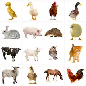 Grid of pictures to memorize - farm animals