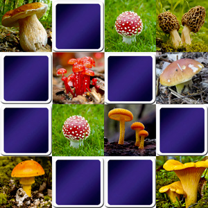 memory game online for adults - mushrooms