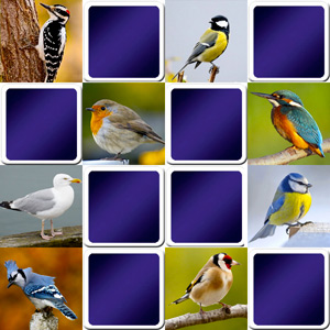 memory game for adults - Common birds