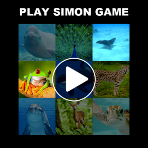 Simon game with animals